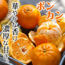 川島さんのポンカン 秀品5kg箱(28-30玉)【華やかな香りと濃厚な甘さ】