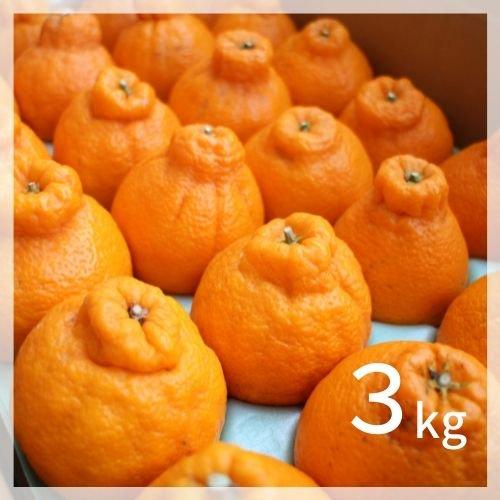 完熟しらぬい (デコポン)2kg