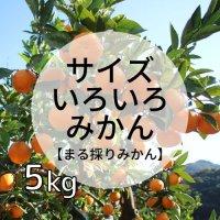 まる採りみかん5kg<br>サイズミックス<br>(12月お届け)【送料無料】