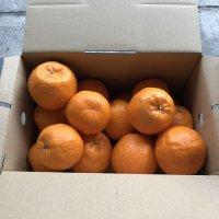 ポンカン2.5kg(1月末〜お届け)