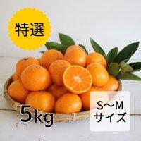 【特選】みかん SMサイズ5kg<br>(12月お届け)【送料無料】