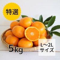 【特選】みかん L・2Lサイズ5kg<br>(12月お届け)【送料無料】