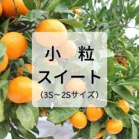 【特選】みかん小粒スイート5kg<br>(12月お届け)【送料無料】