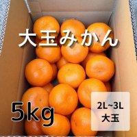 温州みかん大玉(2L~3L) 5kg<br>(12月お届け)【送料無料】