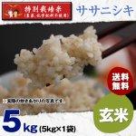 玄米5キロ令和2年度宮城県産・ササニシキ|特別栽培米(農薬、化学肥料不使用)