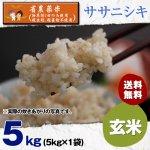 玄米5キロ令和2年度宮城県産・ササニシキ|省農薬米(除草剤1回・殺虫殺菌剤不使用)