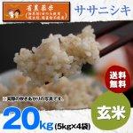 玄米20キロ令和2年度宮城県産・ササニシキ|省農薬米(除草剤1回・殺虫殺菌剤不使用)