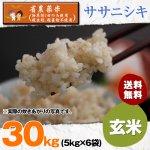 玄米30キロ令和2年度宮城県産・ササニシキ|省農薬米(除草剤1回・殺虫殺菌剤不使用)