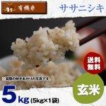 【6ヶ月定期便】玄米5キロ宮城県産・ササニシキ|有機米(有機JAS認証)