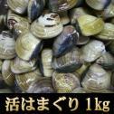 <業務用 活きはまぐり(ハマグリ・蛤)1kg>【冷蔵便・冷蔵便同梱可】【お吸い物、酒蒸し、天ぷらに!】【海鮮バーベキュー】