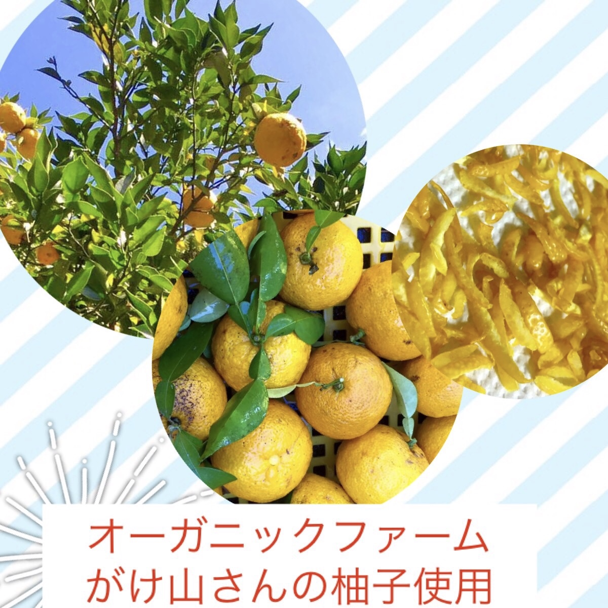 https://img14.shop-pro.jp/PA01185/173/etc/yuzu-1.jpg?cmsp_timestamp=20190222192301