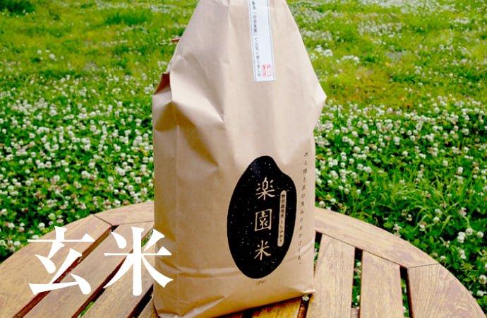 令和2年産 特別栽培米 こしひかり楽園米 【 玄米 5kg 】