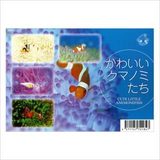 ポストカード(5枚組) かわいいクマノミ うみまーる企画