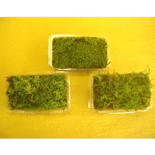 苔3種(ハイ苔・スナ苔・シノブ苔)パック