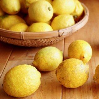 【2020年度産】農粋つかさ庵さんの木成り完熟オーガニックレモン