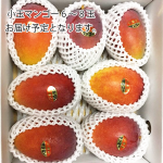 <img class='new_mark_img1' src='https://img.shop-pro.jp/img/new/icons60.gif' style='border:none;display:inline;margin:0px;padding:0px;width:auto;' />【予約:8月以降お届け予定】<br>やんばる産小玉マンゴー:1キロ〜