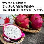 【送料無料】ドラゴンフルーツ6玉〜7玉:白