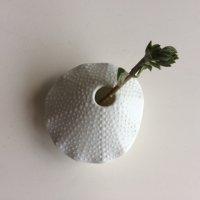 Pebble Ceramic Design Studio シェルベース 貝