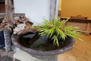 【村長現物】A-59 めだかオリジナル水鉢