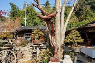 【村長現物】木工5 自然木一本木
