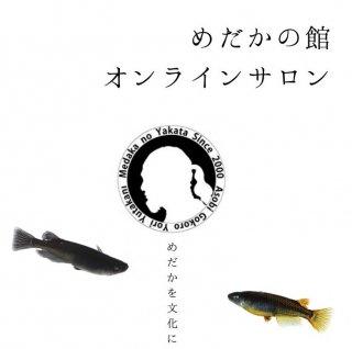 めだかの館オンラインサロン会員権(月額500円)