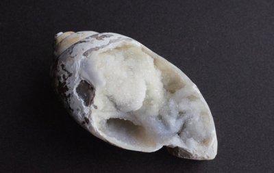 貝の化石 Fossil Shell