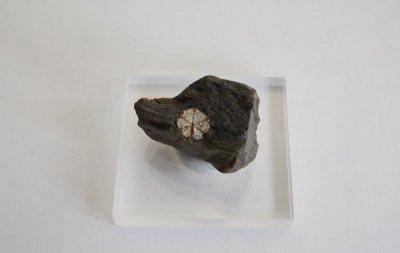 桜石 Cerasite