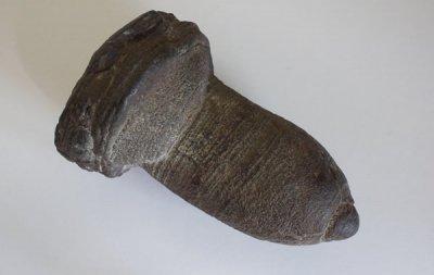パイライト(凝結物)  Pyrite Concretion