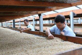 エルサルバドル モンテシオン農園 200g