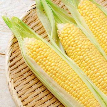 トウモロコシ(路地栽培)黄色