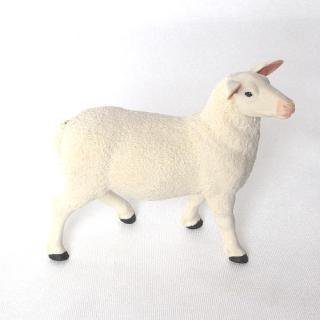 羊(メス)
