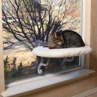 【猫 窓用ベッド】 K&H Manufacturing ウィンドウソファー ベーシック イージーマウント(簡易取付式) ラムウール調 61 x 35cm 窓幅40cmから取付可能