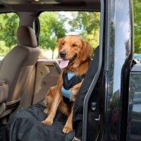 【犬 車用ハーネス】 Bergan 安全ドッグシートベルトつなぎリード付き 中型犬用