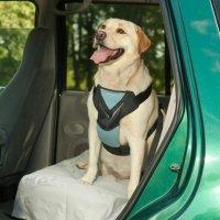 【犬用カー用品】Bergan(ベーガン) 安全ドッグシートベルトつなぎリード付き 大型犬用