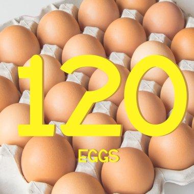 平飼い有精卵120個