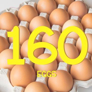 平飼い有精卵160個