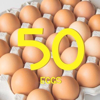 平飼い有精卵50個
