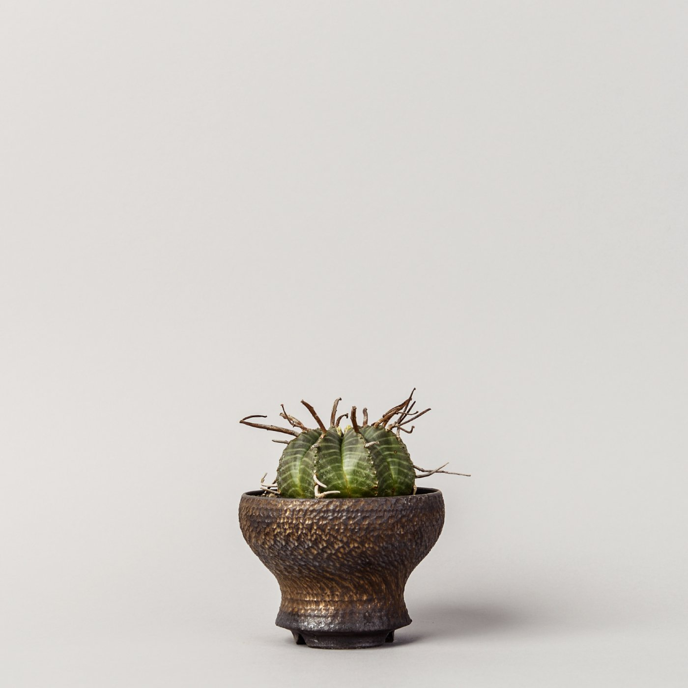 "Euphorbia valida × ""GOUJIN""POT"
