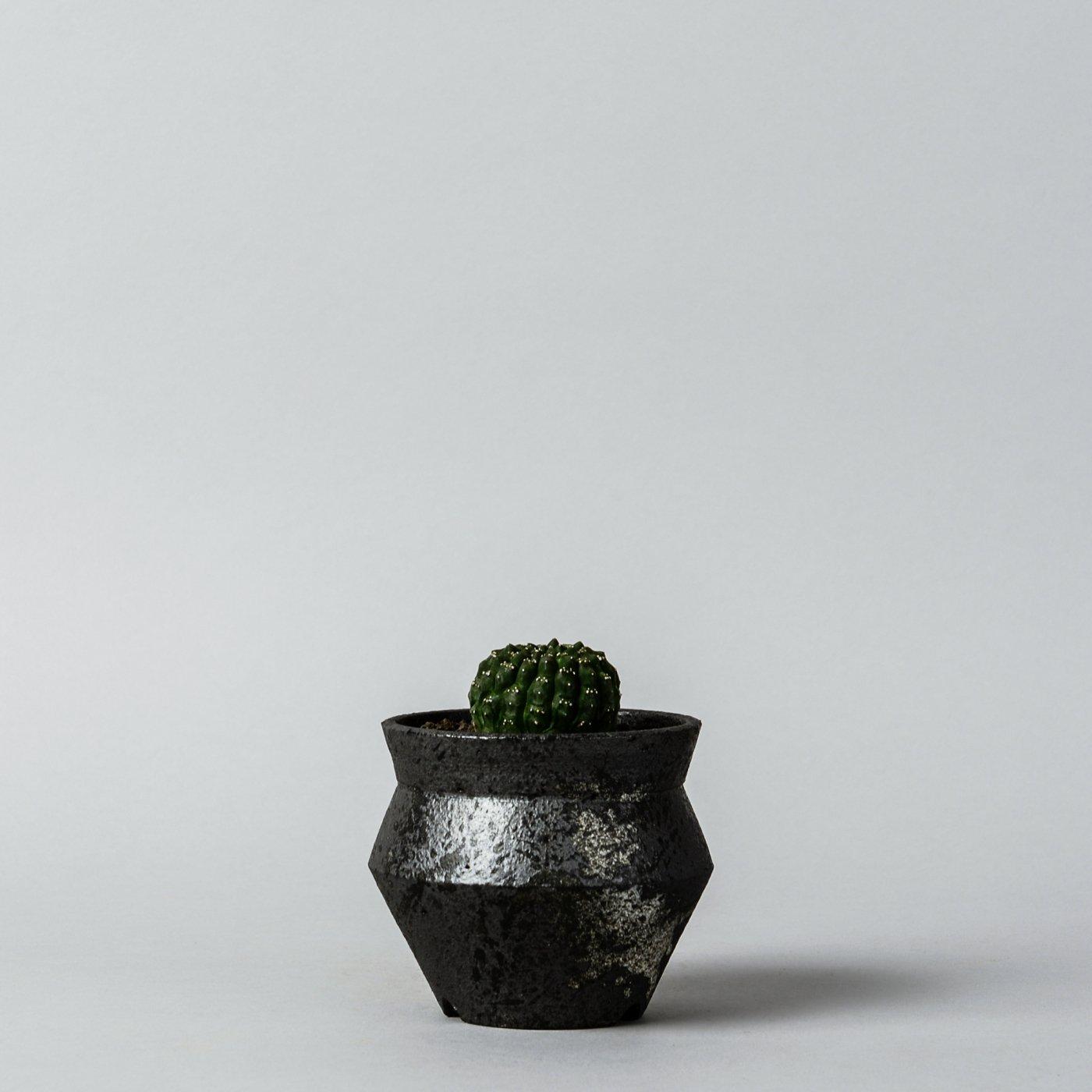 """Euphorbia gymnocalycioides × """"sho-do""""POT"""