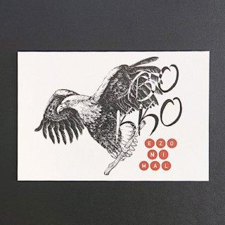 EZONIMAL(エゾニマル)ポストカード| オジロワシ
