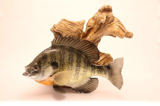 Bluegill Replica