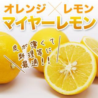 マイヤーレモン 5キロ