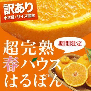 訳あり!4.5キロ 超完熟春『はるぽん』(小さ目・サイズ混合)
