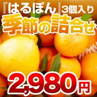 季節の詰め合わせ【2980円分セット】