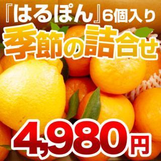 季節の詰め合わせ【4980円分セット】