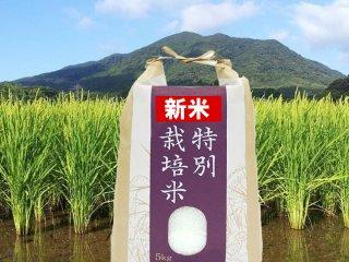 夢つくし玄米5キロ(予約受付中)